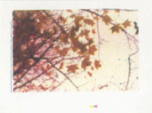 Gravura em Serigrafia Policromia 01 em Serigrafia 2016 Imagens para livro P -Daniel de Cavalho© todosdireitos reservados
